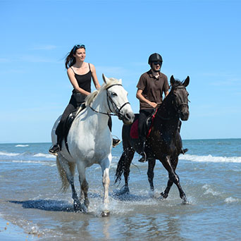 SK Place Crete Villas - Horse Riding